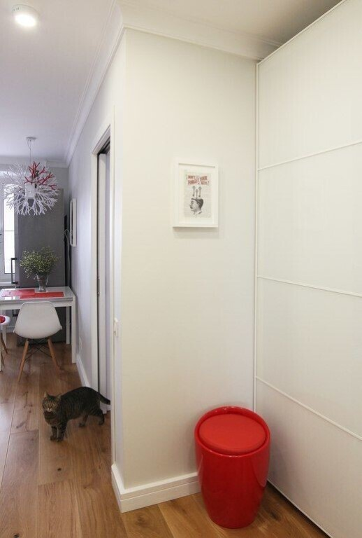 коридор с кошкой